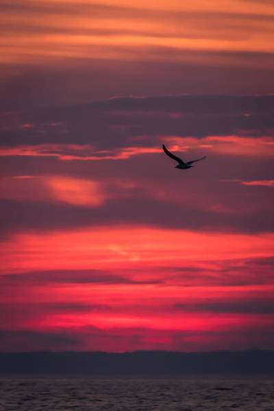 Photograph - Seagull Flying At Sunset Jersey Shore by Terry DeLuco