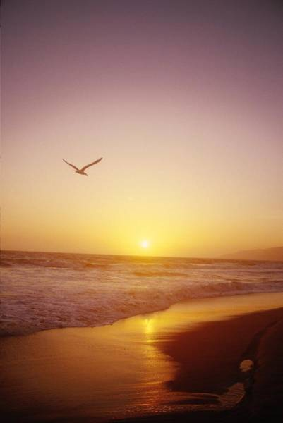 Wall Art - Photograph - Seagull Flying In Yellow Sunset by Gillham Studios