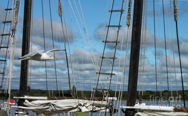Photograph - Seagull Flying Past Rigging And Ropes Of Sailing Vessel On Stomy Day With Shore And Cloudy Sky In Ba by Susan Vineyard
