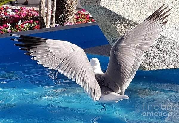 Wall Art - Pyrography - Seagull by Jeepee Aero