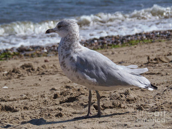 Photograph - Seagull On Beach by Lita Kelley
