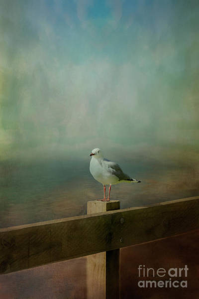 Photograph - Seagull On A Fence by Elaine Teague