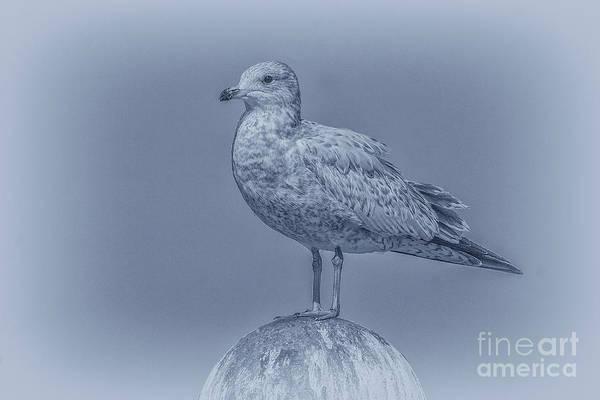 Wall Art - Digital Art - Seagull On Post In Blue by Randy Steele