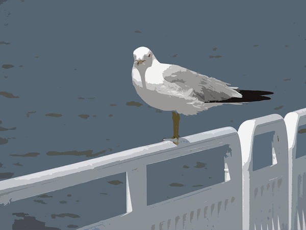 Photograph - Seagull On The Rail by Michelle Calkins
