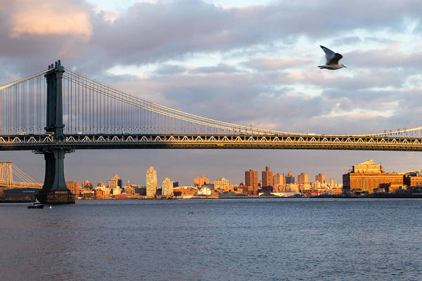 Photograph - Seagull Over Manhattan Bridge by SR Green