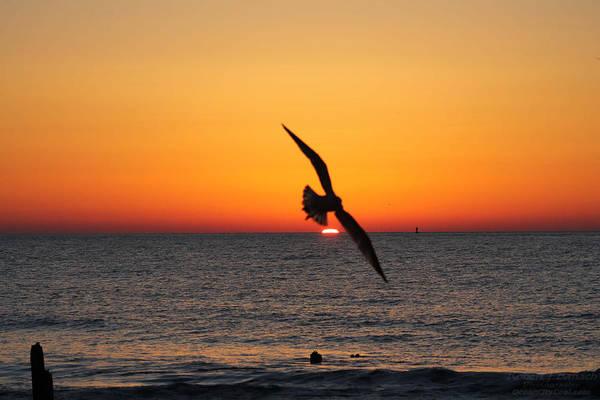 Photograph - Seagull Over Sunrise by Robert Banach