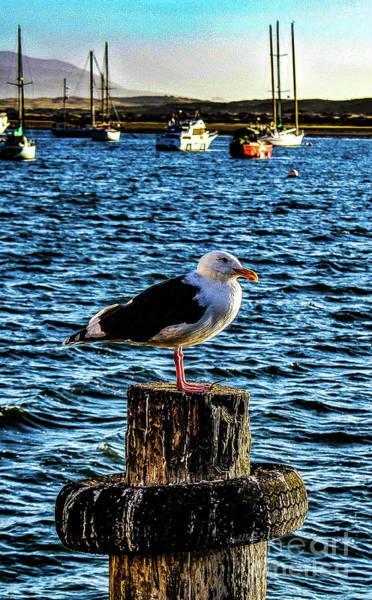 Seagull Perch Art Print