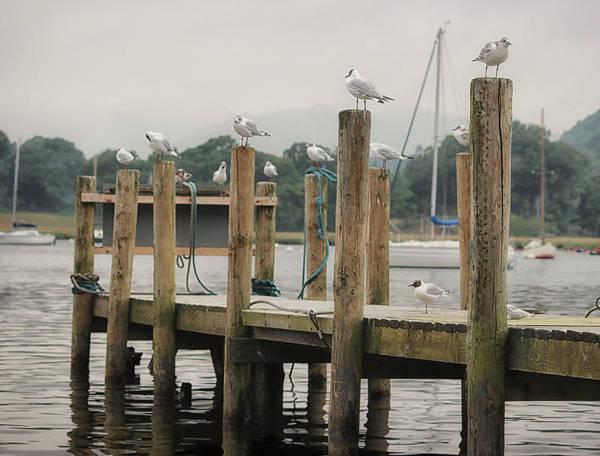 Wall Art - Photograph - Seagull Pier by Martin Newman