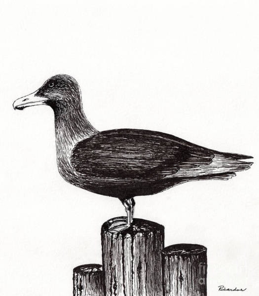 Drawing - Seagull Portrait On Pier Piling E3 by Ricardos Creations