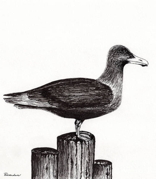 Drawing - Seagull Portrait On Pier Piling E3l by Ricardos Creations