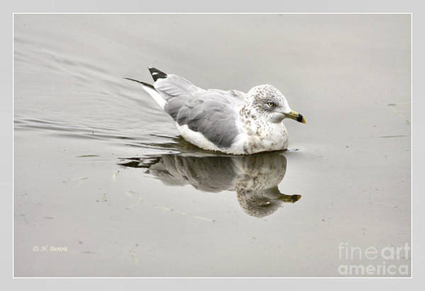 Photograph - Seagull Reflections by Deborah Benoit