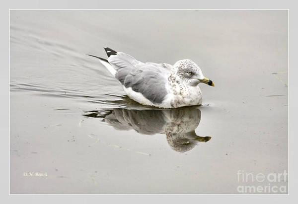 Photograph - Seagull Reflections by Deborah Benoit