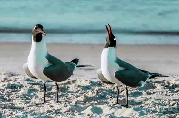 Photograph - Seagull Serenade 4954 by Ricardos Creations