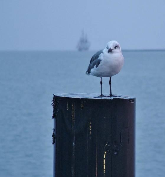 Seagull Ship Art Print