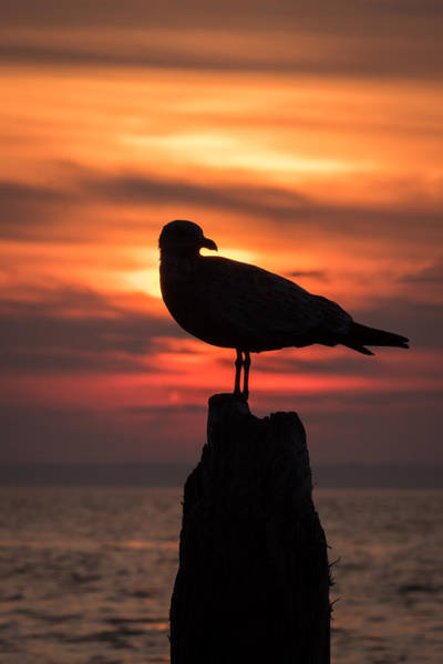 Photograph - Seagull Silhouette Jersey Shore Nj by Terry DeLuco