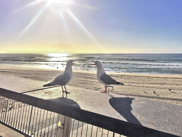 Two Birds Photograph - Seagull Sonnet  by Az Jackson