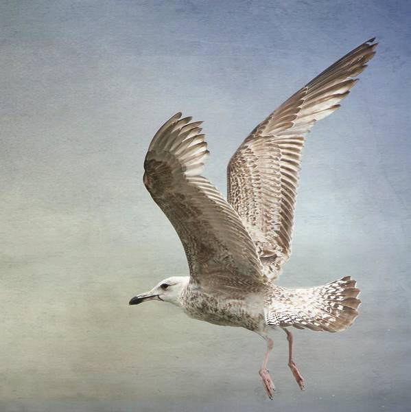 Wallpaper Mixed Media - Seagull Still Life by Heike Hultsch