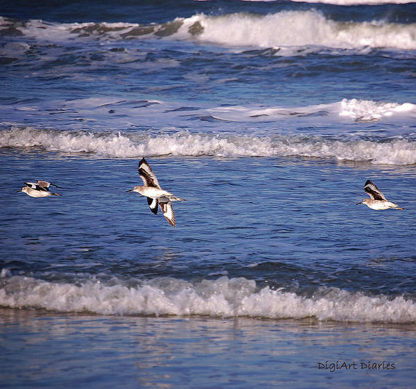 Wake Digital Art - Seagulls Above The Seashore by DigiArt Diaries by Vicky B Fuller