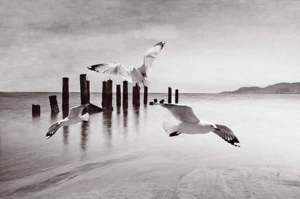 Wall Art - Photograph - Seagulls At Ocean Bw by Laura D Young