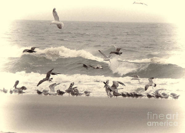 Seagulls Mixed Media - Seagulls By The Sea  by Beverly Guilliams