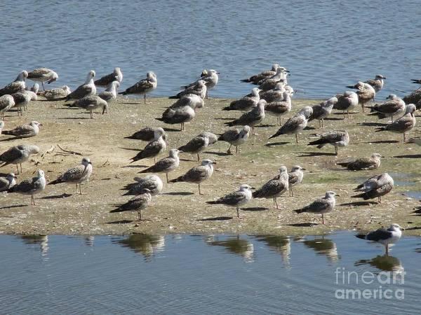 Photograph - Seagulls by Chani Demuijlder