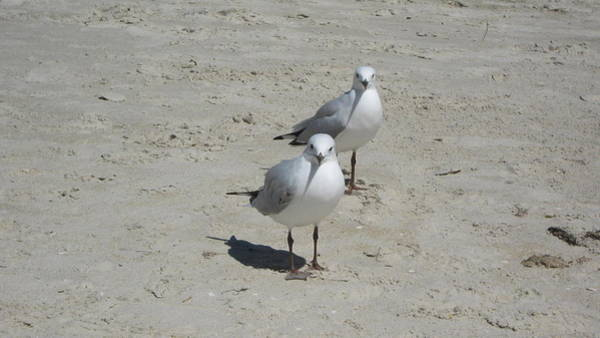 Photograph - Seagulls by Emma Frost