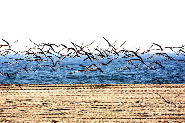 Photograph - Seagulls Flight At Cape May by John Rizzuto