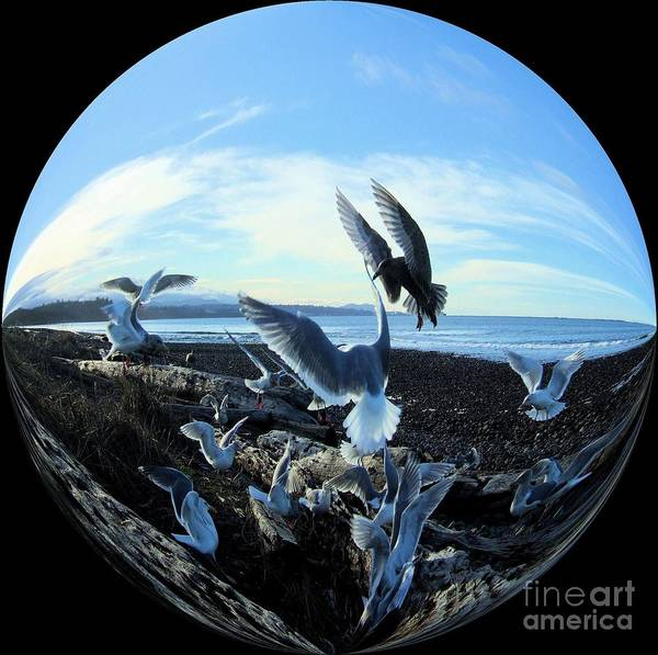 Photograph - Seagulls In A Chrystal Ball  by Delores Malcomson
