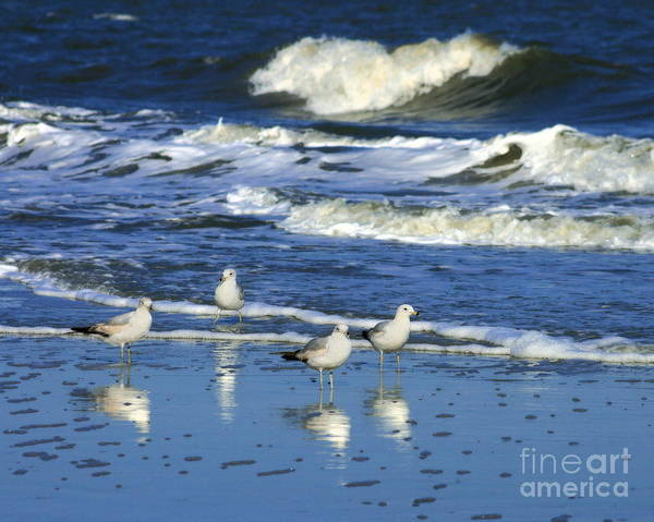 Photograph - Seagulls In The Tide by Angela Rath
