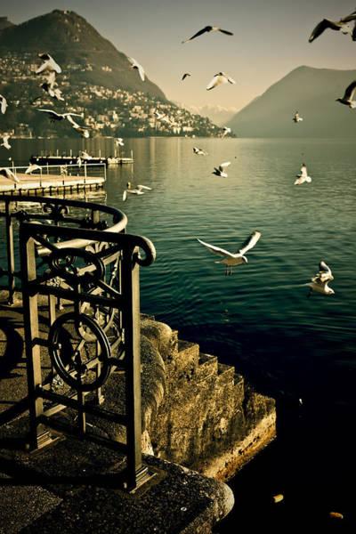 Wall Art - Photograph - Seagulls by Joana Kruse