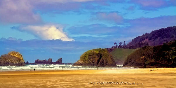 Photograph - Seagulls On Cannon Beach by David Patterson
