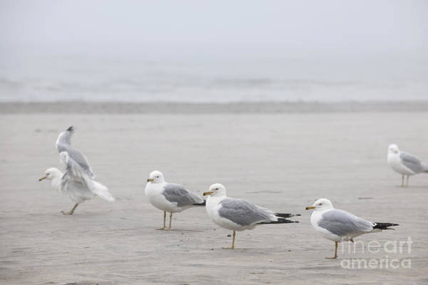 Wall Art - Photograph - Seagulls On Foggy Beach by Elena Elisseeva