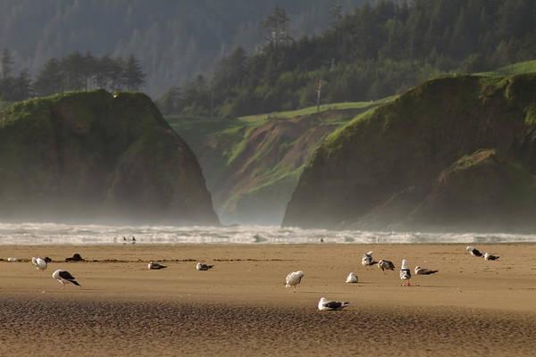 Photograph - Seagulls On Oregon Coast by Sven Brogren