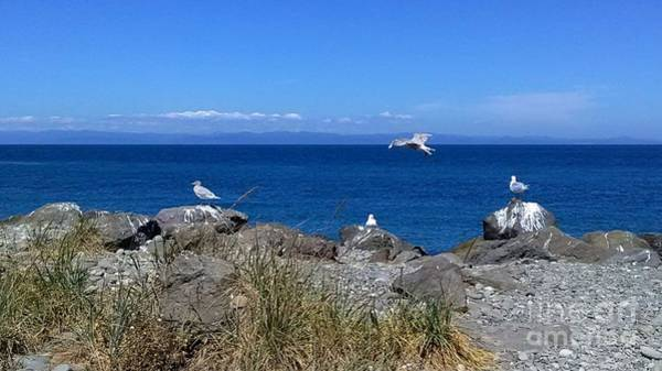 Ediz Hook Wall Art - Photograph - Seascape, Seagulls And Rocks On The Ediz Hook Jetty Port Angeles Washington State by Delores Malcomson