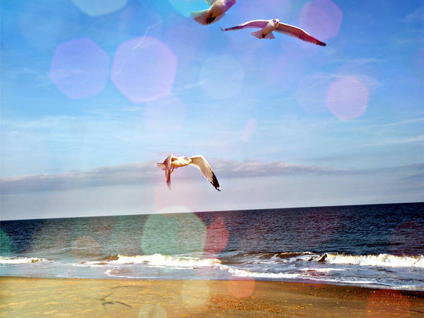 Seagulls Mixed Media - Seagulls Take Me Away by Trish Tritz