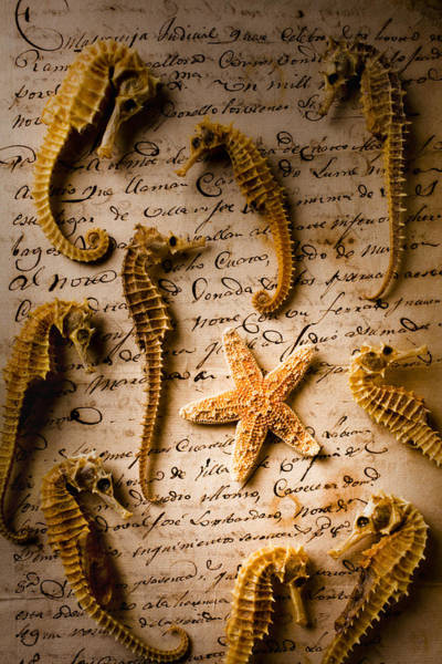 Starfish Photograph - Seahorses And Starfish On Old Letter by Garry Gay