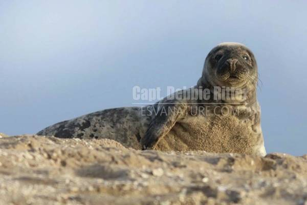 Photograph - Seal 0040 by Captain Debbie Ritter