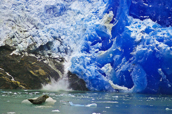 Photograph - Seal And Glacier by Harry Spitz