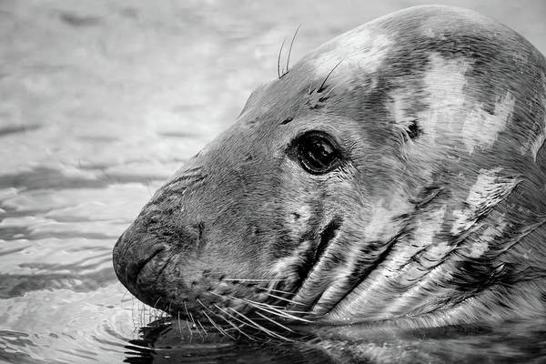 Photograph - Seal by Don Johnson