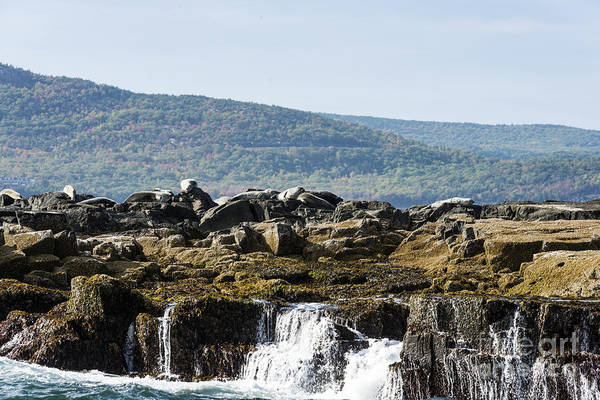 Photograph - Seal Island by Anthony Baatz