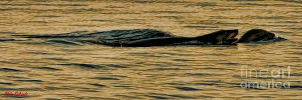 Photograph - Seal Love by Blake Richards