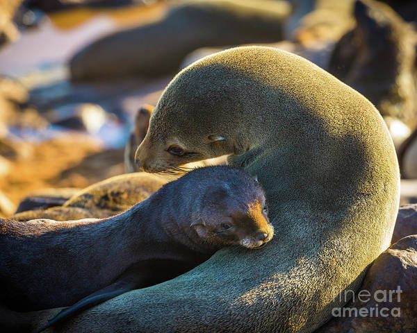 Wall Art - Photograph - Seal Mom And Pup by Inge Johnsson