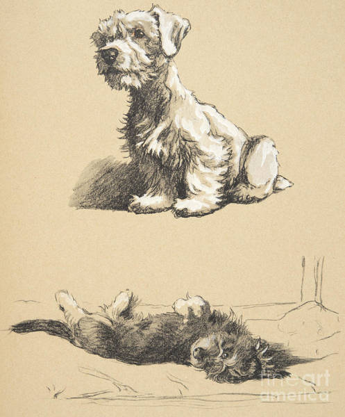 Charles Drawing - Sealyham And Rough Dachund Puppy, 1930 by Cecil Charles Windsor Aldin