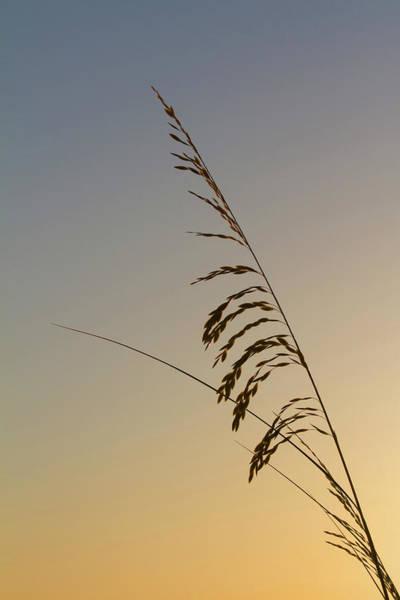 Photograph - Seaoats At Dawn by Paul Rebmann