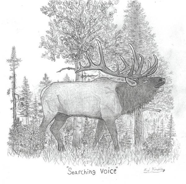 Bugling Drawing - Searching Voice by Chad Hinckley