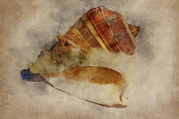 Wall Art - Mixed Media - Seashell 1  by Kevin O'Hare