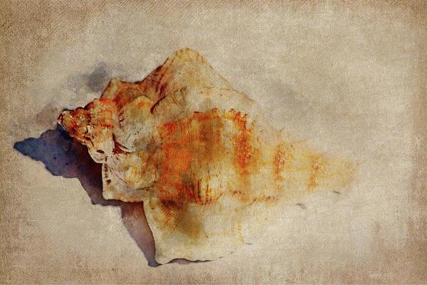 Wall Art - Mixed Media - Seashell 2 by Kevin O\'Hare