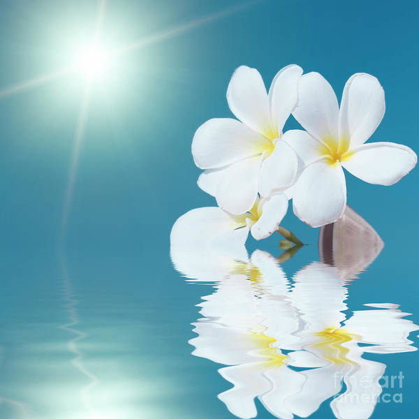 Three Seashells Photograph - Seashell And Flower In The Sea by MotHaiBaPhoto Prints