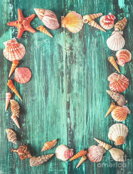 Wall Art - Photograph - Seashell And Starfish Frame On Wooden Background by Jelena Jovanovic