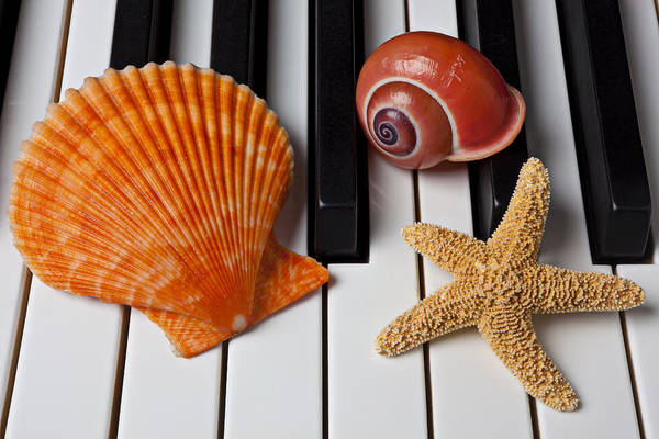 Keyboard Instrument Wall Art - Photograph - Seashell And Starfish On Piano by Garry Gay